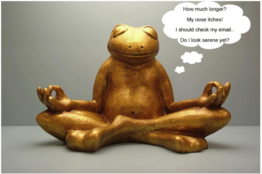 frog-meditating